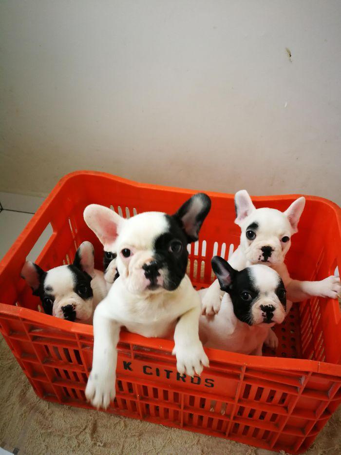 И еще  няшные щенки :-)