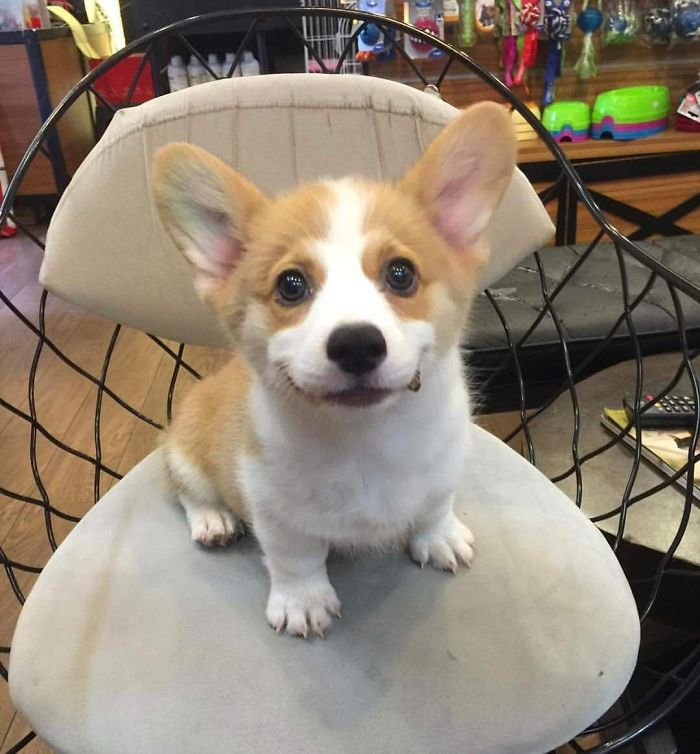 Se llama Lilo y sonríe travieso