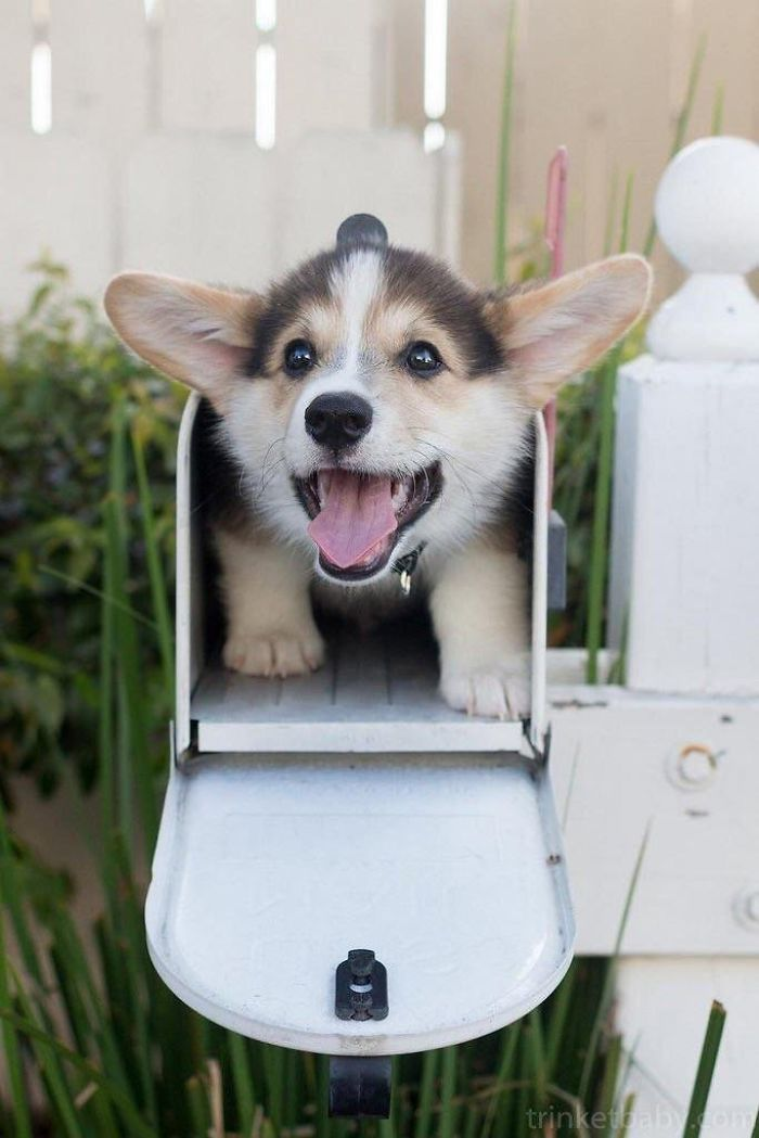 Mail Delivery