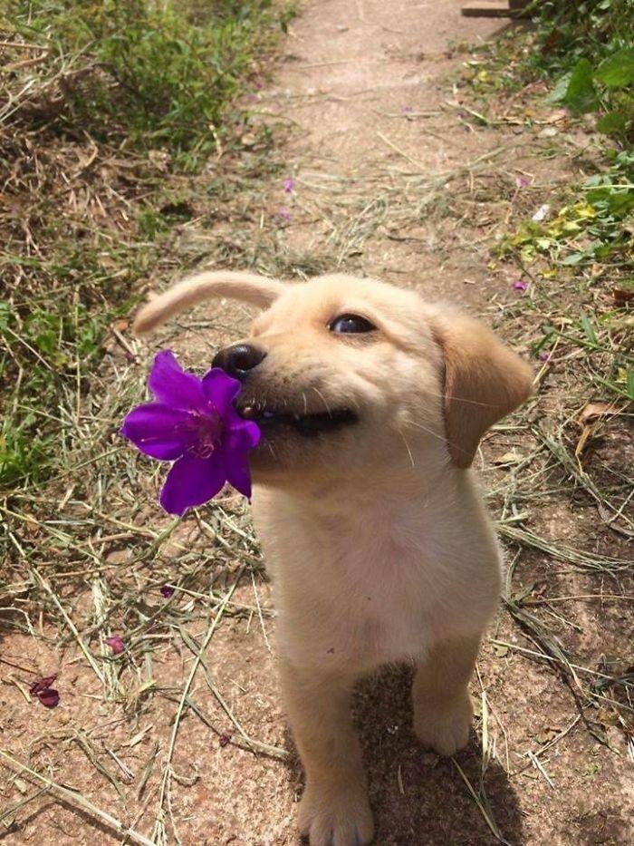 Te traigo un regalito