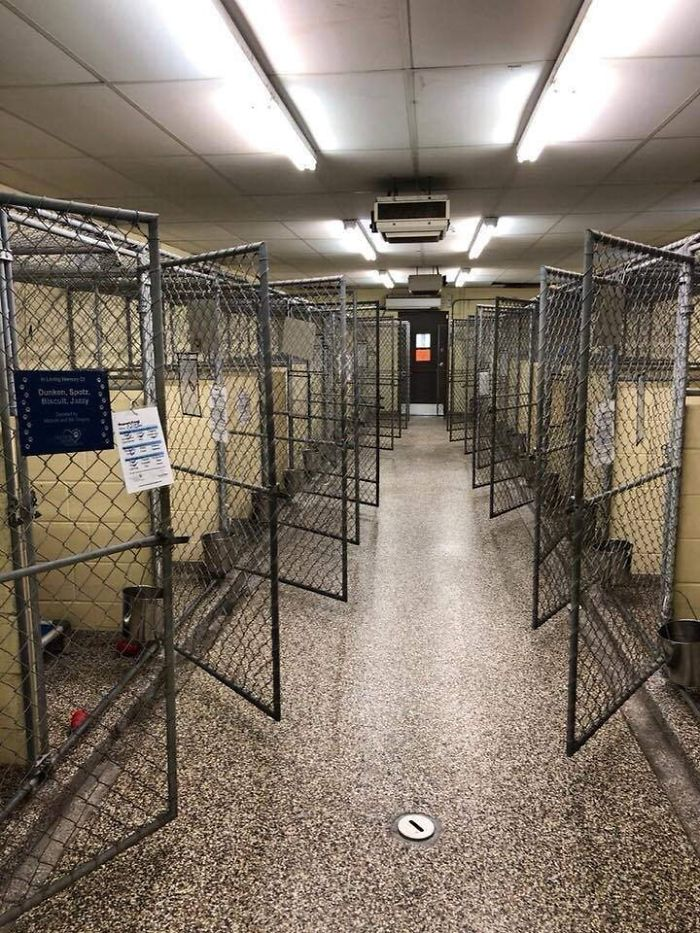 Clear The Shelters Day Was A Success Here In Tampa