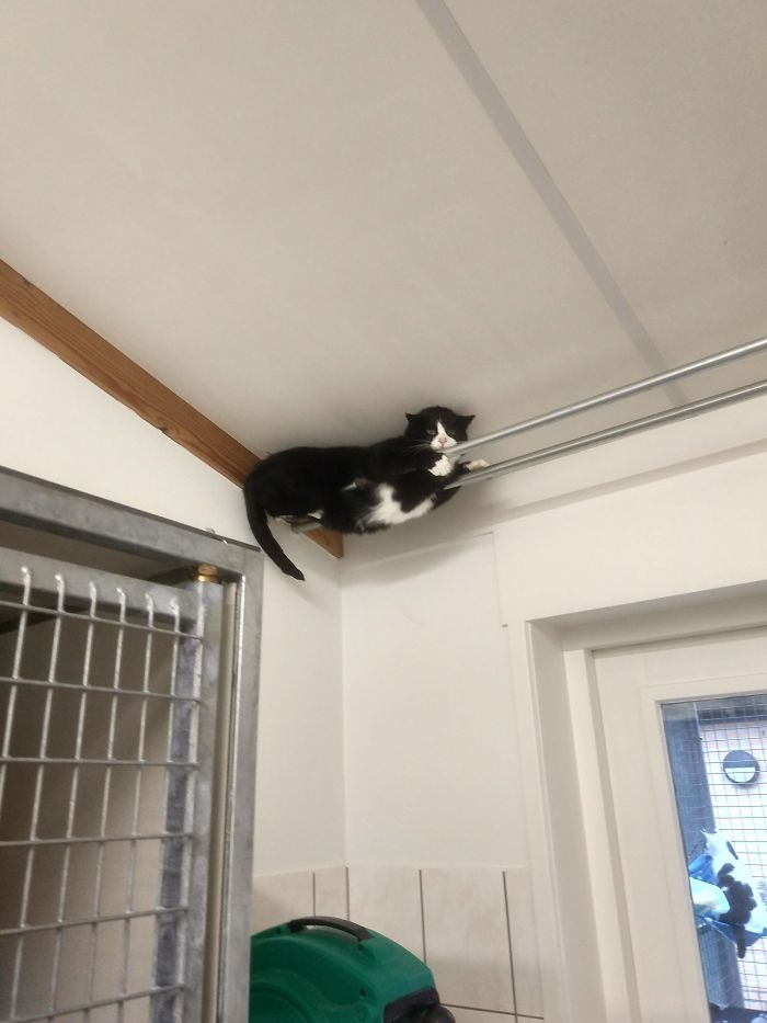 This Cat At My Local Shelter Really Doesn't Like People