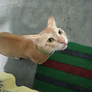 Nini Meow