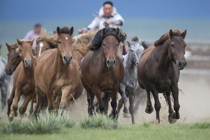 I Captured Horse Photos Showing Mongolia's Unchanged Nomadic Culture