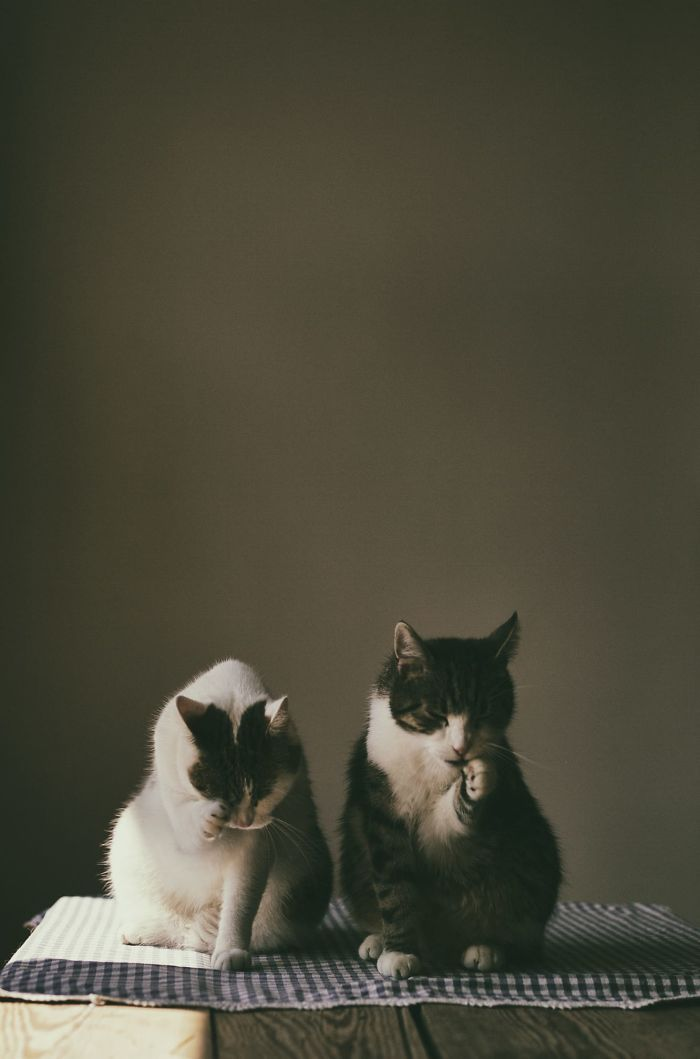 My Private Cats' Models!