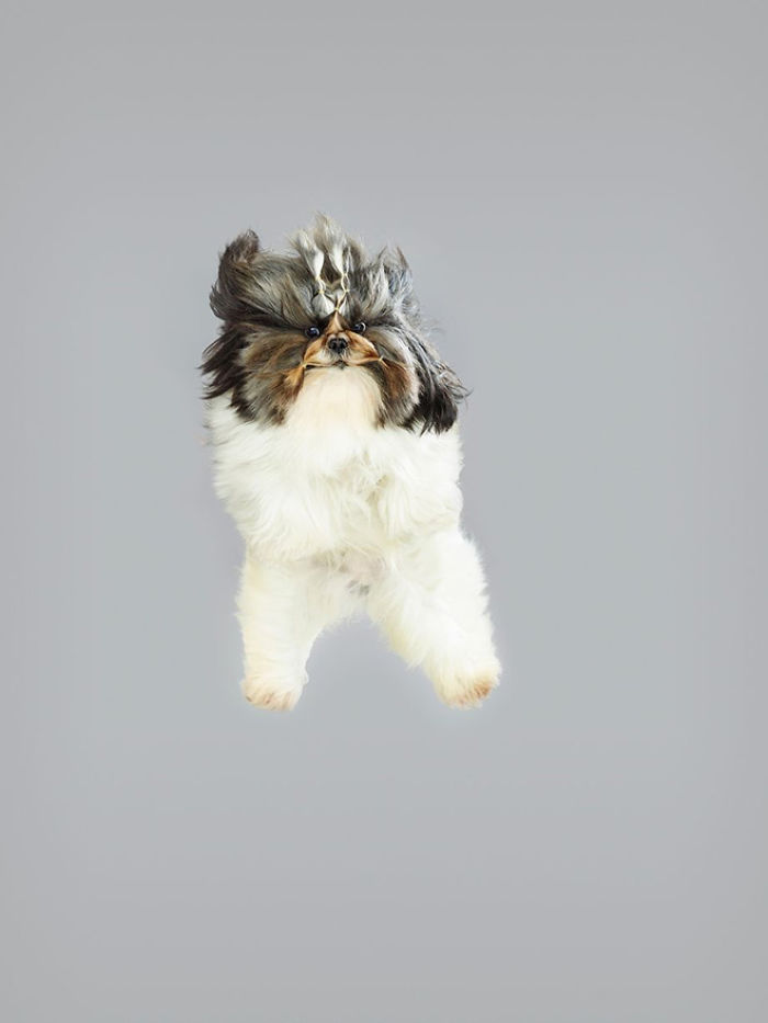Photographer Makes Dogs Fly And The Result Is Pure Relaxation Between The Owners And The Animals
