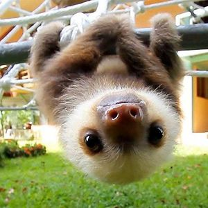 sloth cat