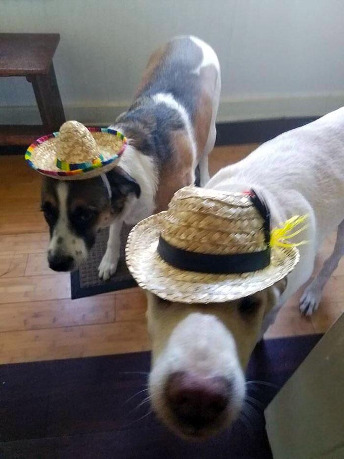 Mi novia me dijo que fuera a por comida y yo, como persona racional, compré sombreros para perros. Resulta que tenía hambre