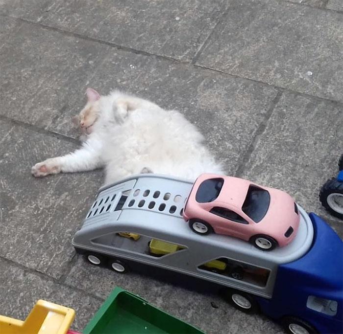 Casi me da un infarto cuando mi marido me dijo que habían atropellado al gato. Luego me mandó esta foto