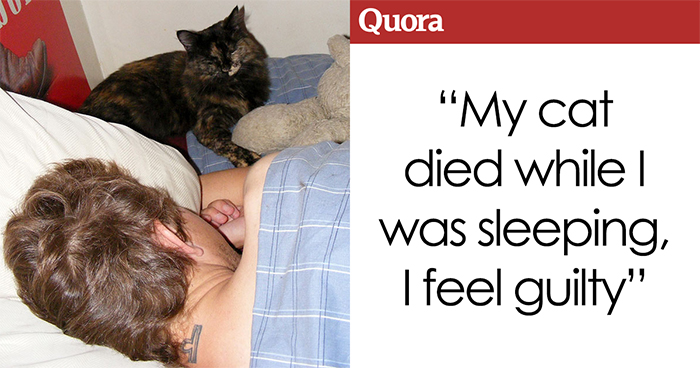 Someone Asks How They Can Stop Feeling Guilty After Their Cat Dies In Their Bedroom, The Internet Delivers