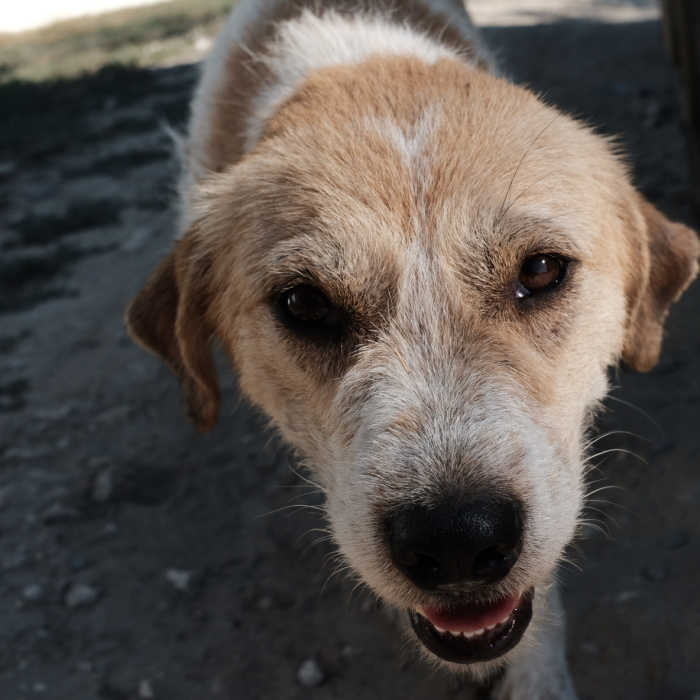 I Take Portraits Of Street Dogs And Here Is The Result