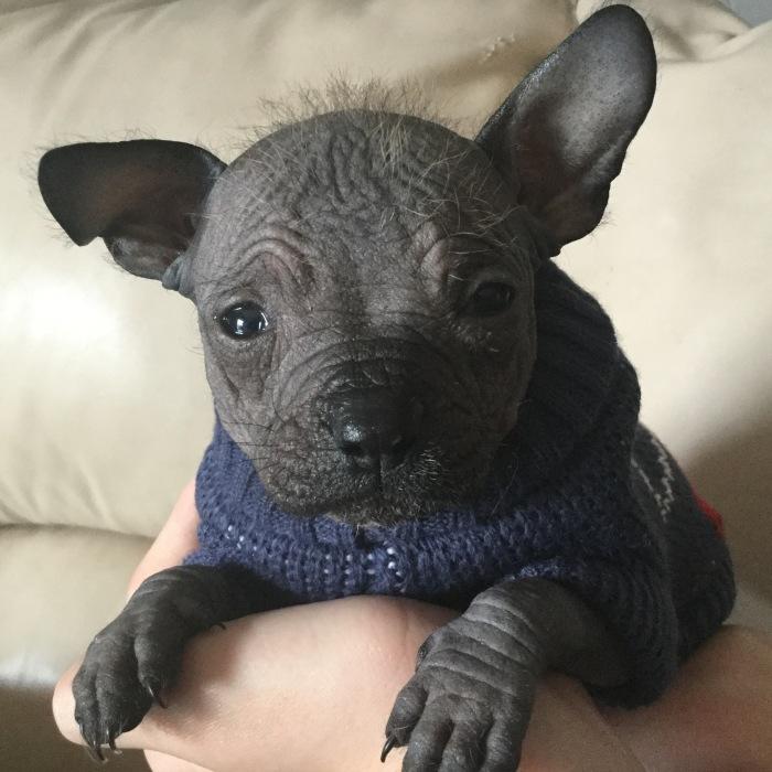 Hello Everyone! My Name Is Dumbo