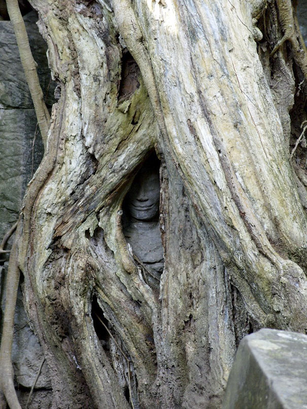 The Statue Being Swallowed By A Tree