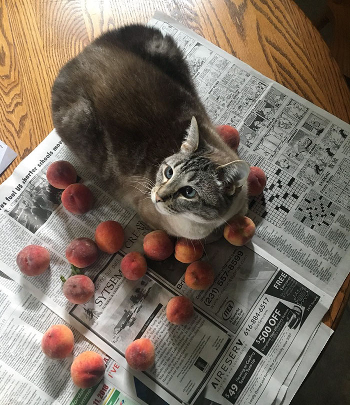This Adorable Cat Loves Peaches And People On The Internet Are Losing Their Minds