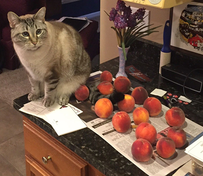 Are peaches bad for cats