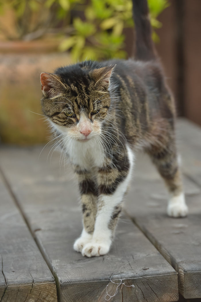 Elderly Cat Finds Its Way Home After 13 Years, And The Reunion Leaves Everybody In Tears