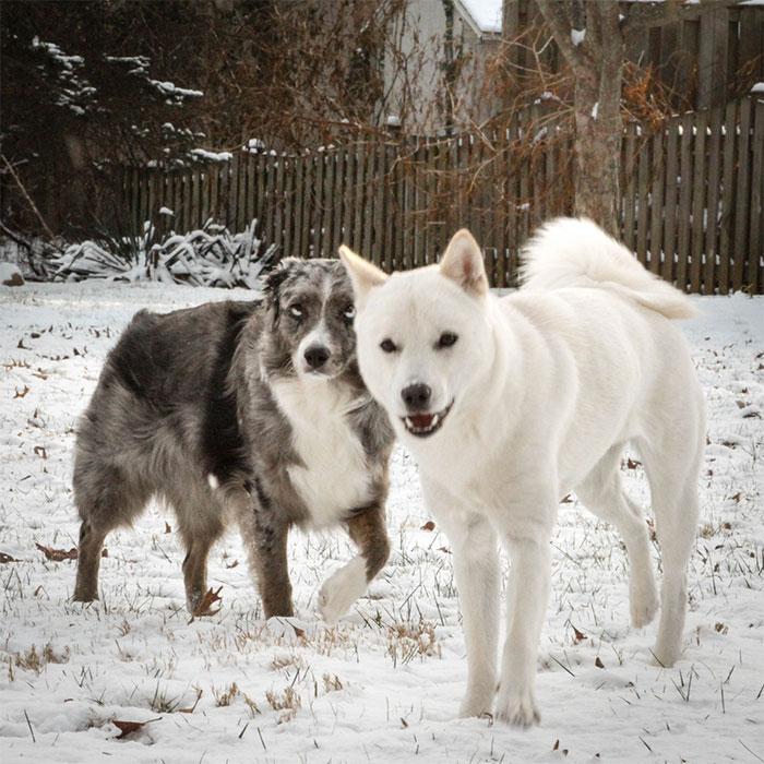 fake-service-dogs-problems-story-trainingfaith-33