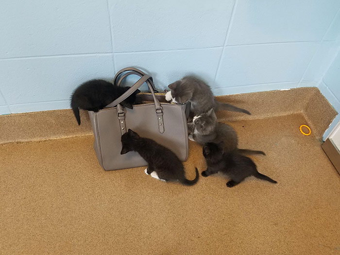 Went To Volunteer At The Humane Society, And The Security Bag Check Was Pretty Intense