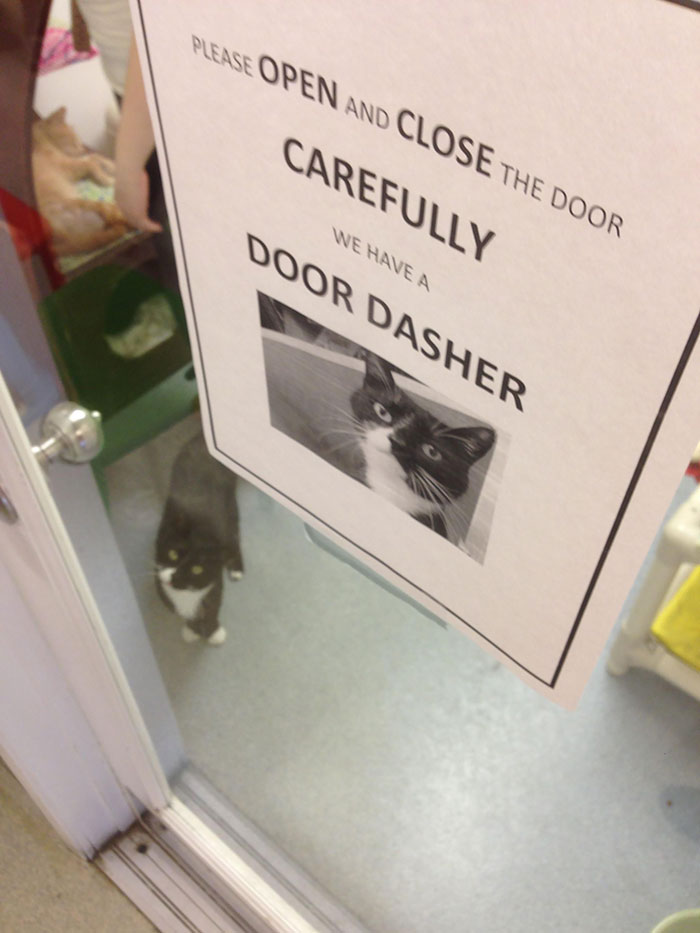 The Animal Shelter Sign Wasn't Lying