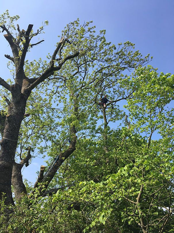 This Is My 69-Year-Old Dad. Today He Climbed A Big-Ass Tree To Cut Off Some Branches, But Somehow Forgot The Rope To Get Down Again. He Had To Wait For Me To Get Home