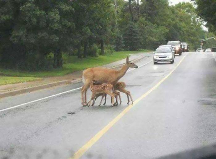 Otra madre amamantando en público
