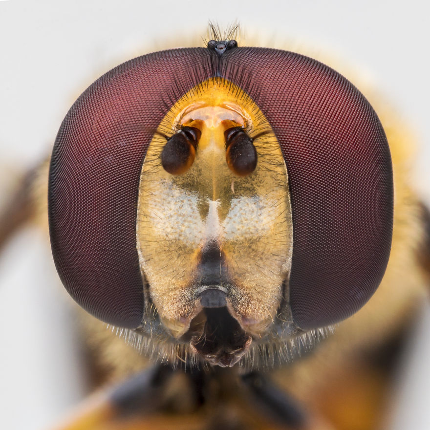 These Portraits Of Insects Will Make You Look At Them In A Whole New Light!