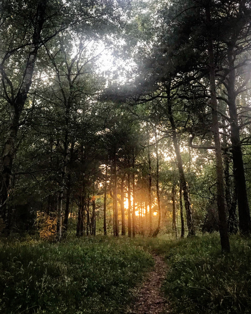 Magical Sunset In The Forest