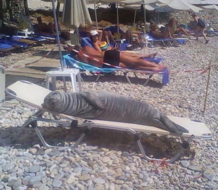 Se llama Argiro y le gusta secarse en esta tumbona que los vecinos le dejan reservada