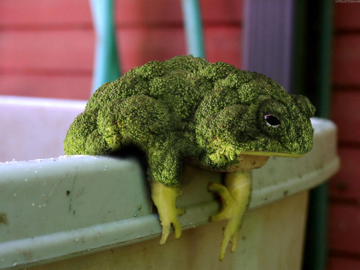 Animals Photoshopped Into Plants