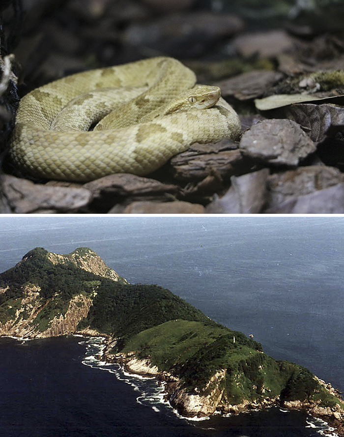 Ilha Da Queimada Grande (Snake Island), Atlantic Ocean 19 of the most mysterious places on earth and some of them are terrifying 19 Of The Most Mysterious Places On Earth And Some Of Them Are Terrifying scary dangerous mysterious forbidden places world 51 5b6aa65490e7c  700