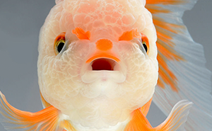 This Thai Photographer Captures Aquarium Fish Like No Other