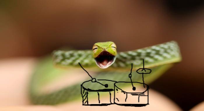 Snake The Drummer