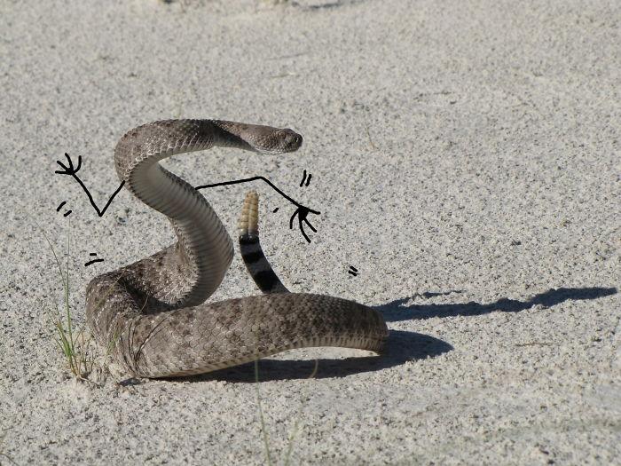 Beep…boop…i'm A Robot Snake (Robot Dance)