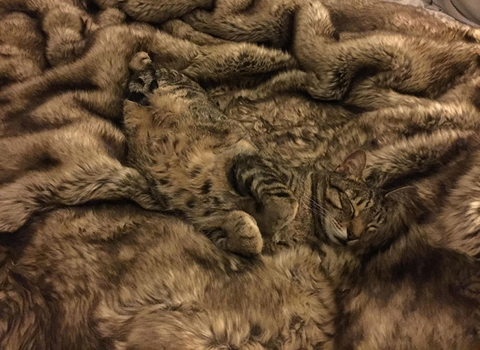Camouflage Level: Expert