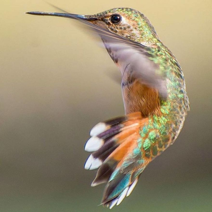 19 Things To Know About Hummingbirds