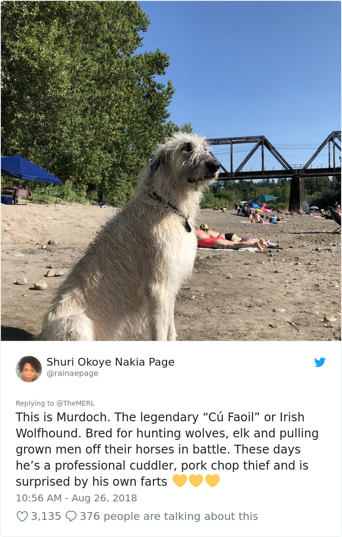 Failed-Working-Dog-Story-Twitter