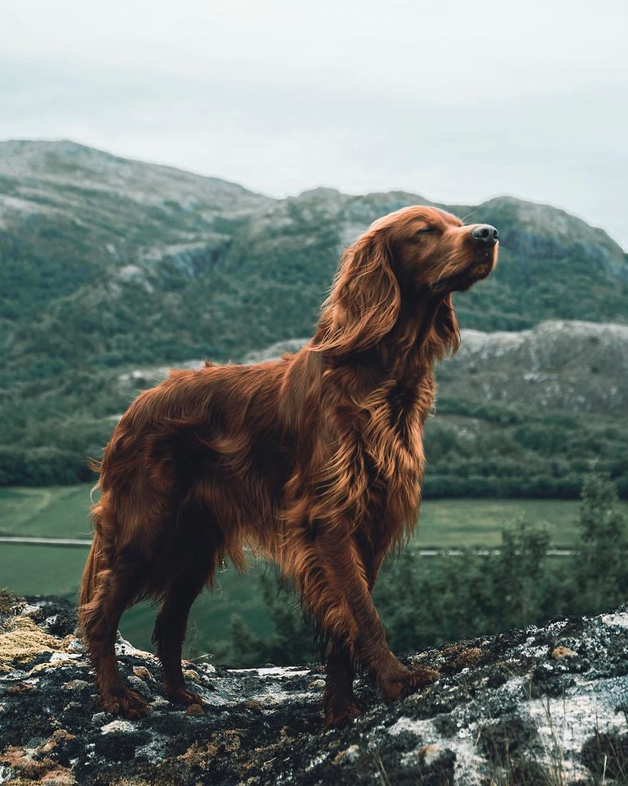 Explore The Norwegian Wilderness Together With George And Troja