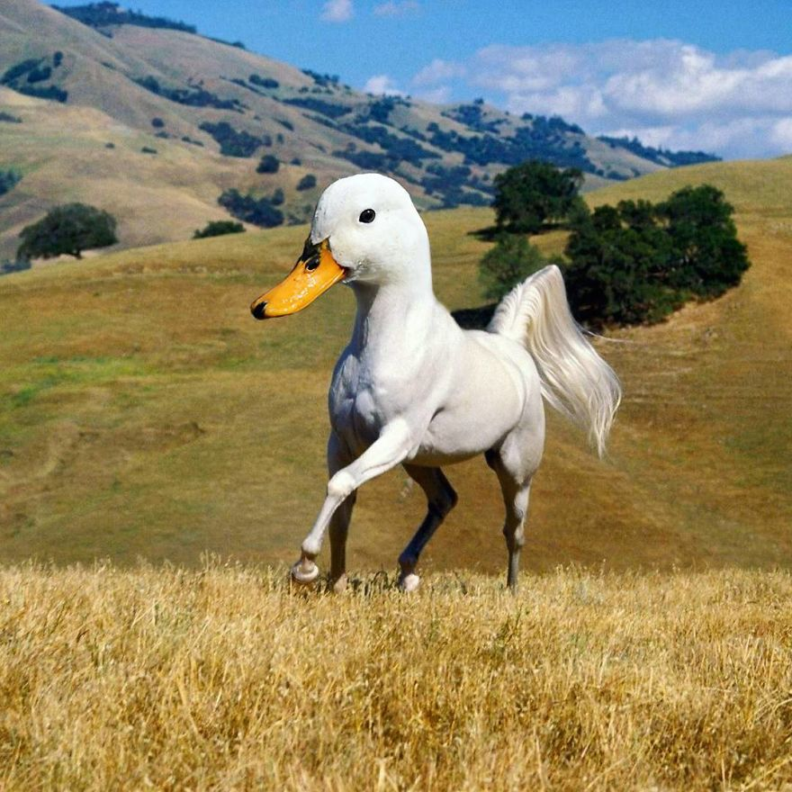 This Artist Creates New Species Of Animals With Photoshop And The Result Is Amazingly Funny
