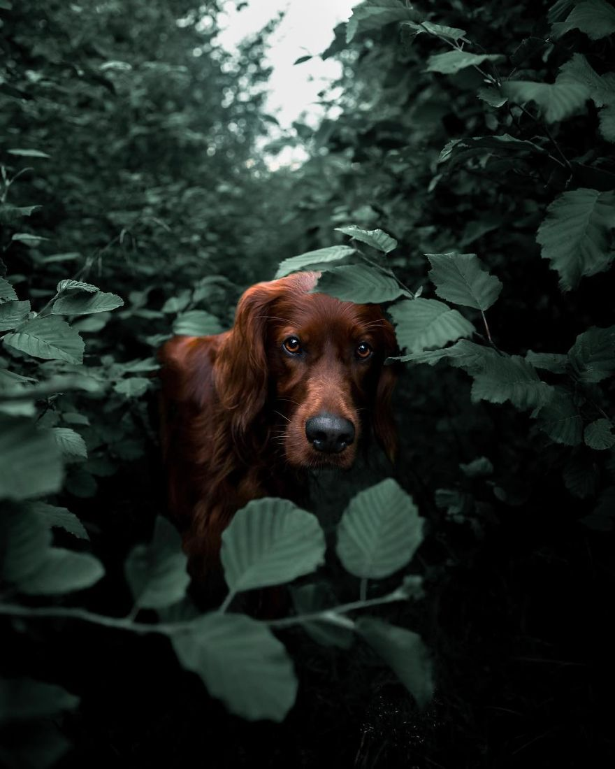 The-Secret-Life-Of-Troja-Photography-George
