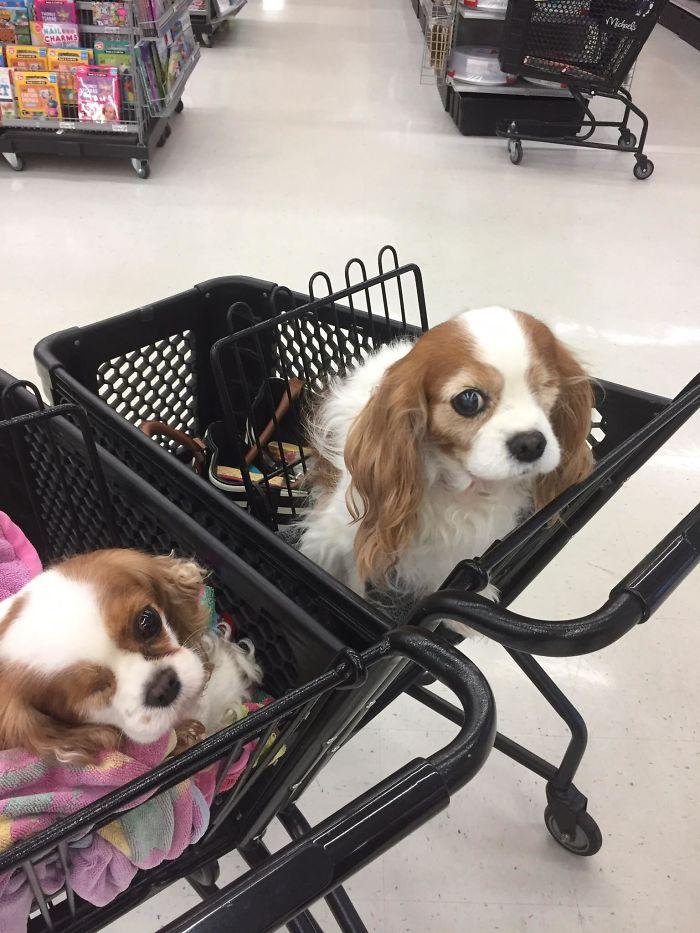 Mi perro, a la izquierda, ha encontrado un doble suyo