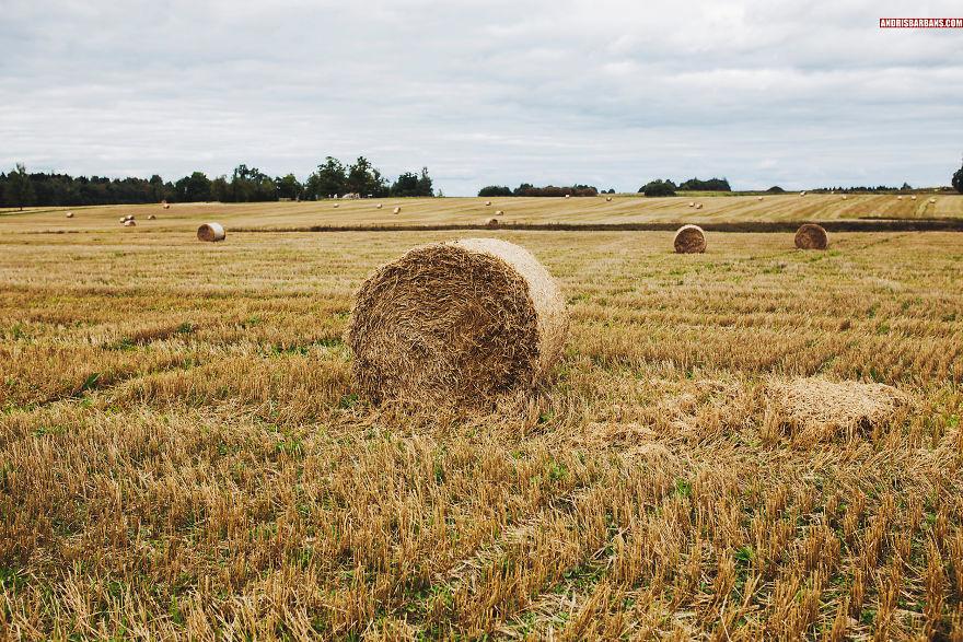 Farming Field In Cesis