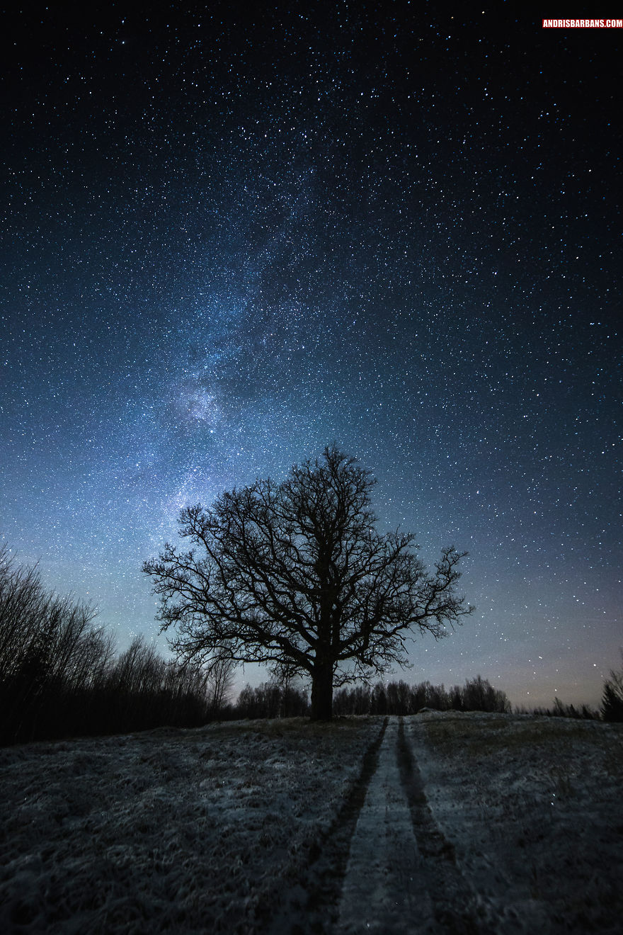 Tree In Zaube, Latvia