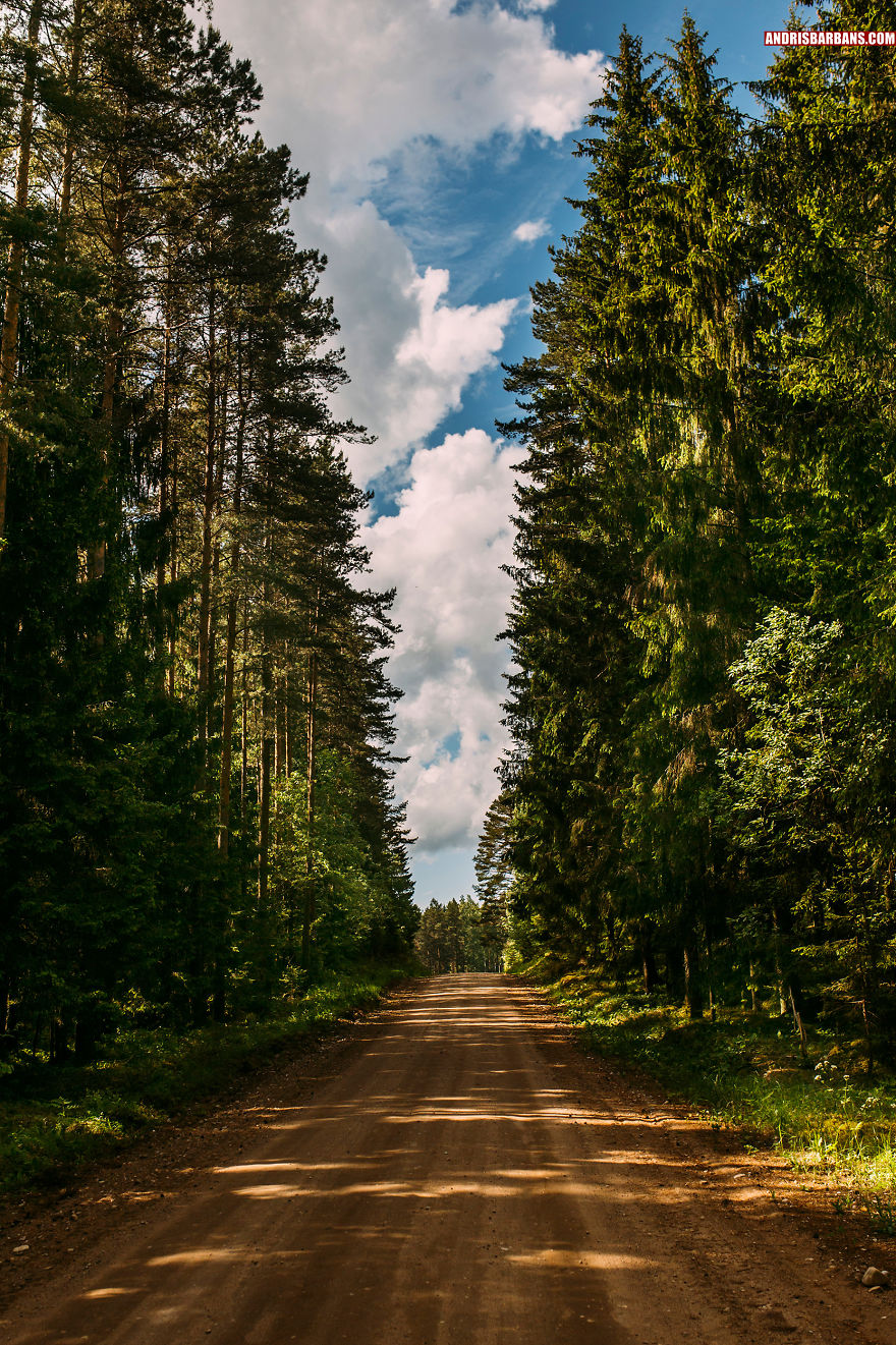Forest Road In Durbe
