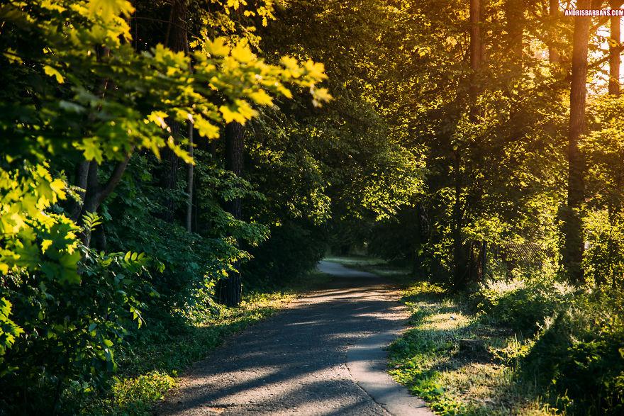 Forest Bike Road In Babite