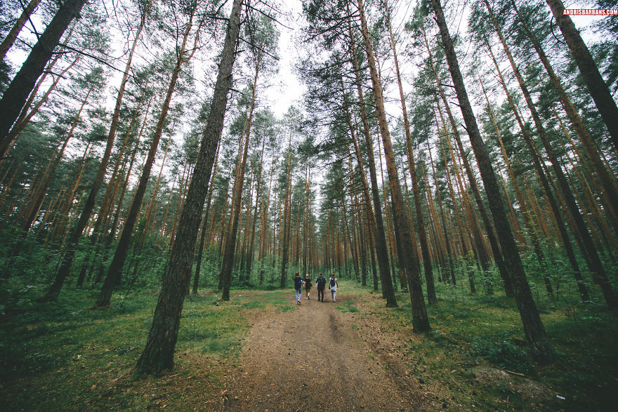 Forest In Imanta