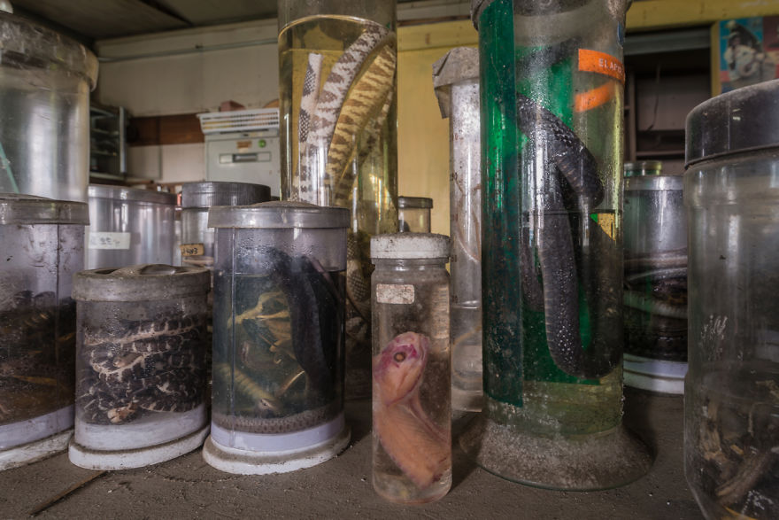 Abandoned Snakes Laboratory
