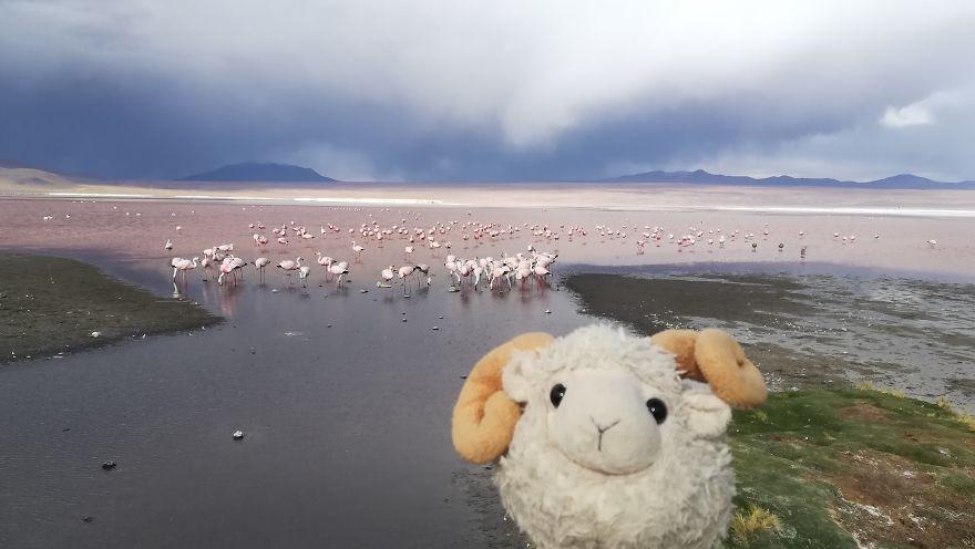 Laguna Colorada, Bolivia: Look How Many Flamingos!