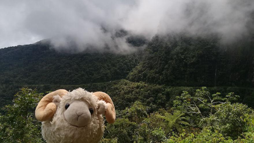 Ready To Explore Amazonia!