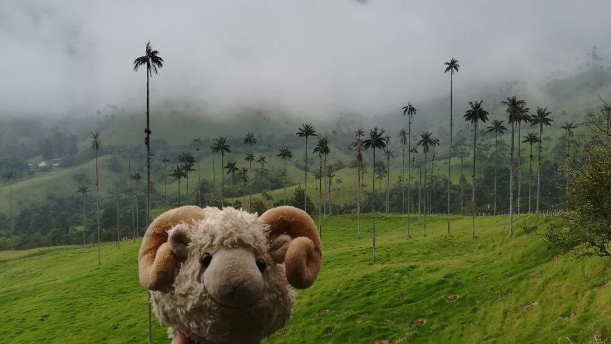 How Tall Are All Those Palm Trees?! Salento, Colombia