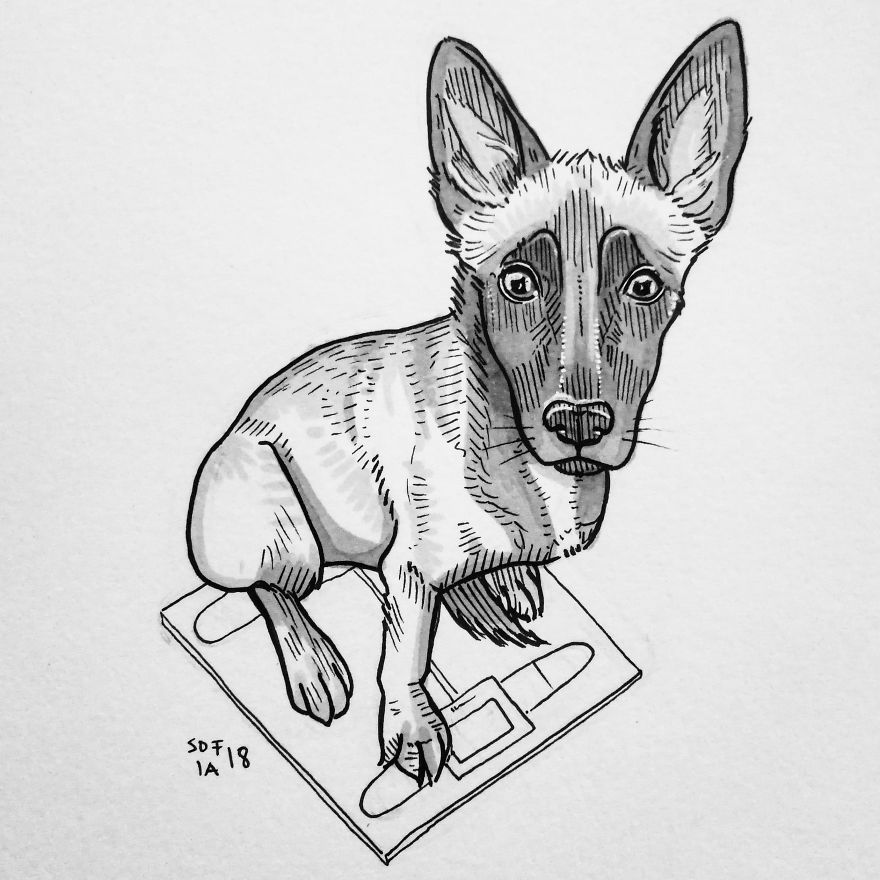 Malinois Pupper
